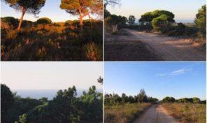 Grand terrain constructible avec vue mer proche Sesimbra